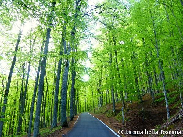 Monte Secchieta