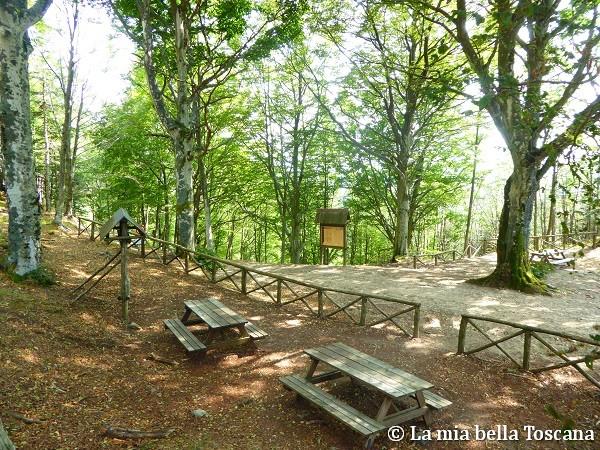 Foresta di Sant'Antonio