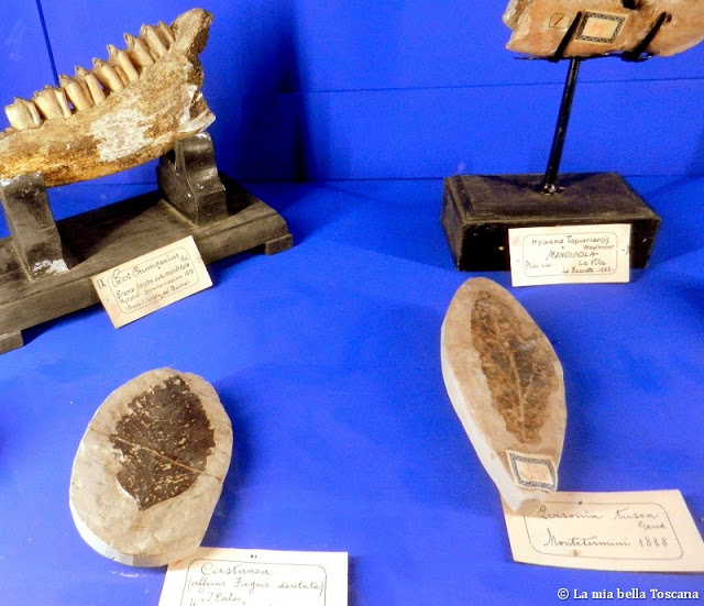 Fossili di Toscana