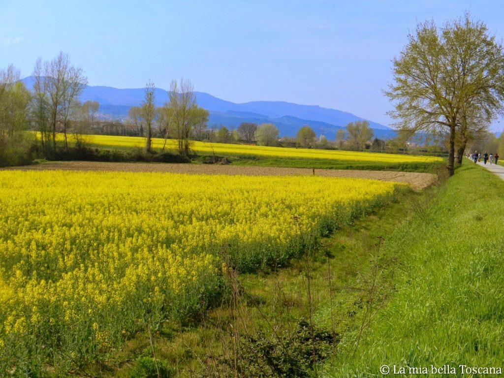 Aree Protette di Toscana