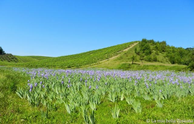 Fiori di Toscana