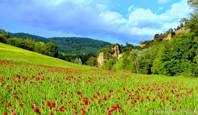 Fiori di Primavera in Toscana