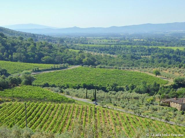 Vigne sulle colline del Valdarno in Toscana