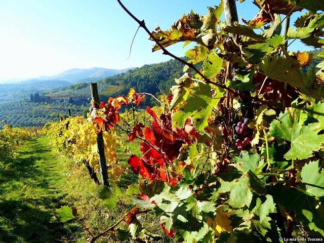 Vigne d'autunno in Toscana