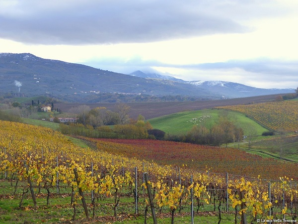 Vigne della Toscana in autunno