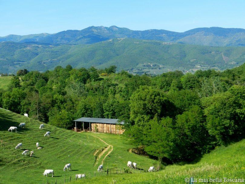 Paesaggio Valdarno