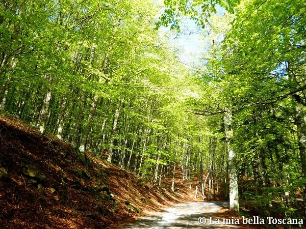 Foresta del Pratomagno