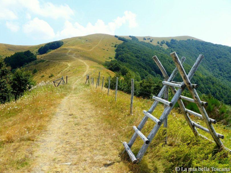 Camminare in Pratomagno