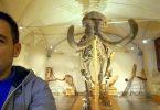 Museo Paleontologico Firenze