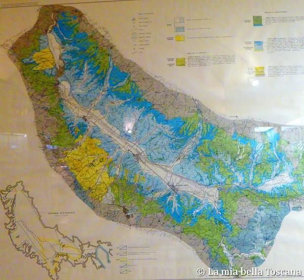 Dove vedere i fossili del Valdarno a Firenze