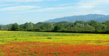 Primavera nel Valdarno