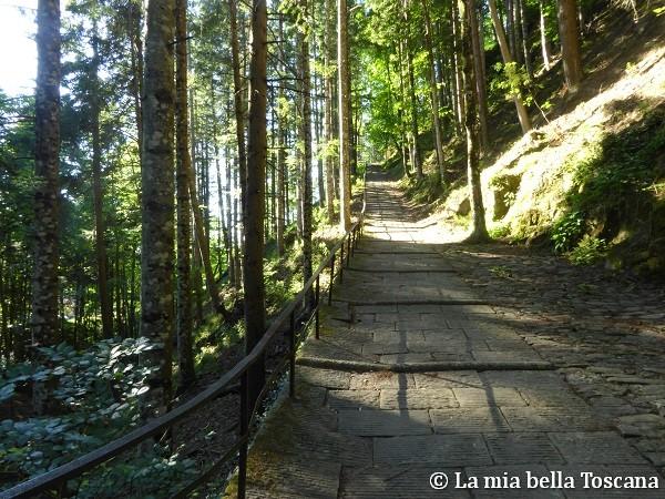 Sentiero panoramico di Vallobrosa