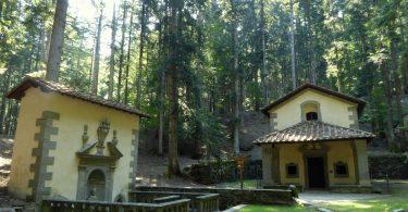 Foresta di Vallombrosa